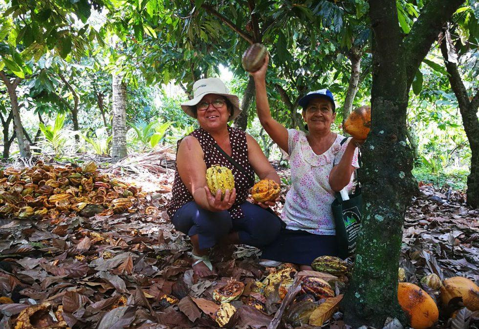 El cacao milenario, fruto del buen vivir