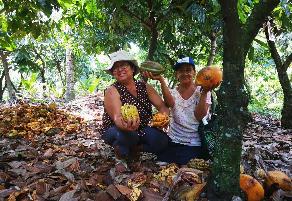 Cacao criollo, fino de sabor y aroma: Una oportunidad para el empoderamiento de las mujeres chocolateras de Jaén