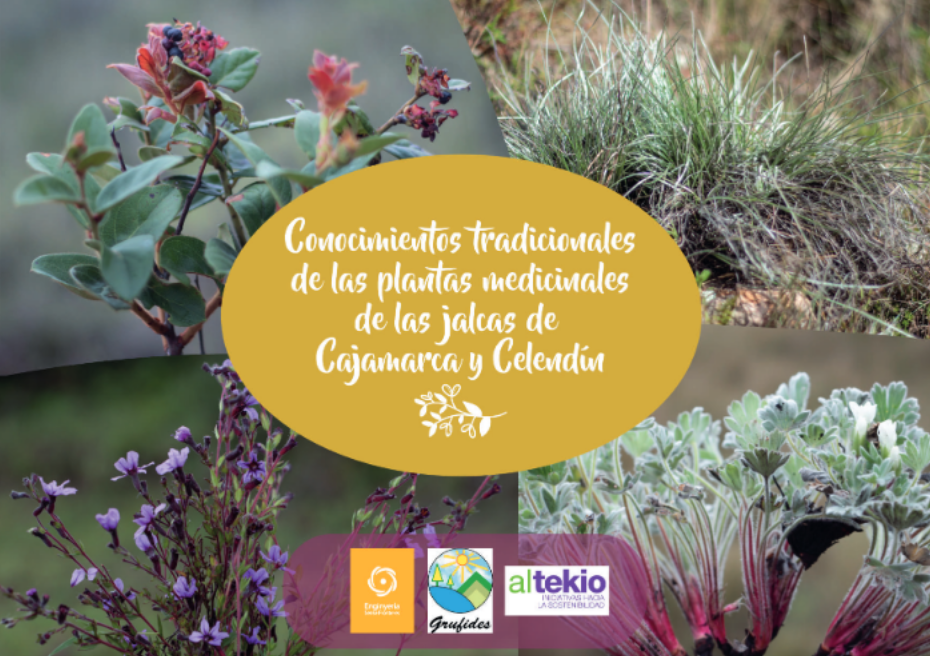Conocimientos tradicionales de las plantas medicinales de Cajamarca y Celendín