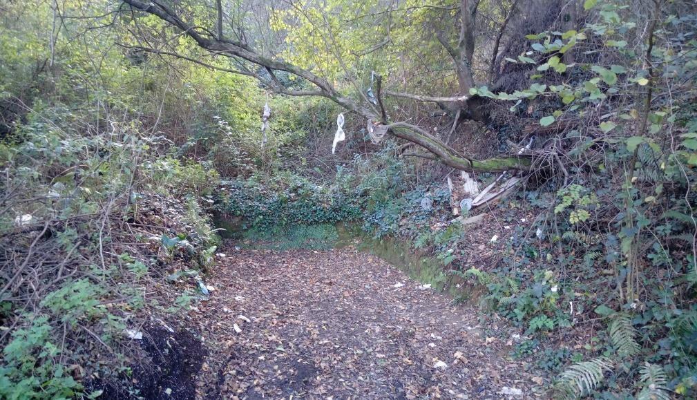 Cultura, ecología y sociedad en nuestro caminar por Artxanda