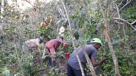 Limpieza de las fincas en la República Dominicana