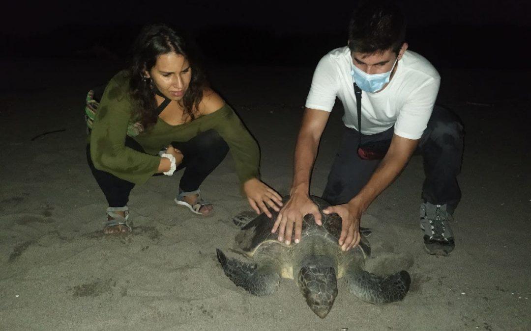 Crónica do Programa de Coñecemento da Realidade Honduras 2021, III. Tartarugas golfinas